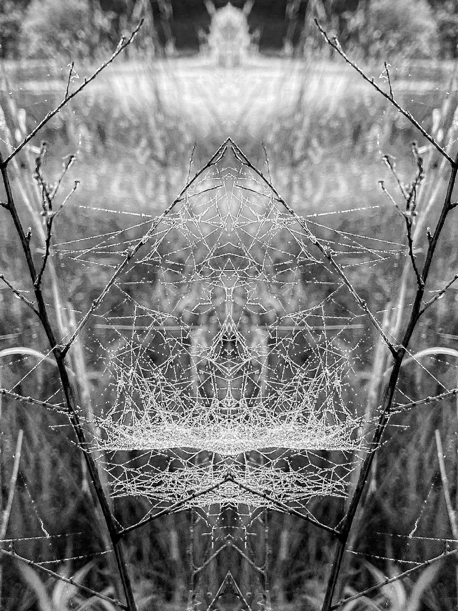 Field of Webs and Dreams, Sharon Bibeault