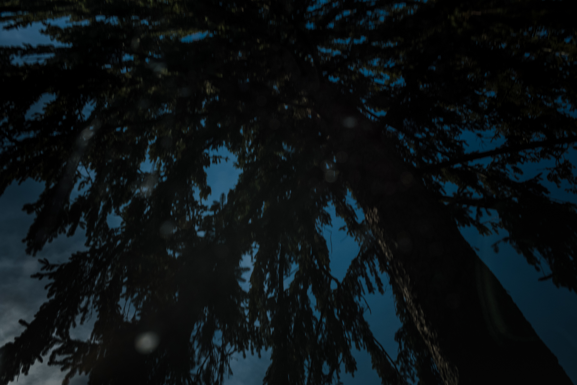 The Trees Have Arms by Denise Laurinaitis