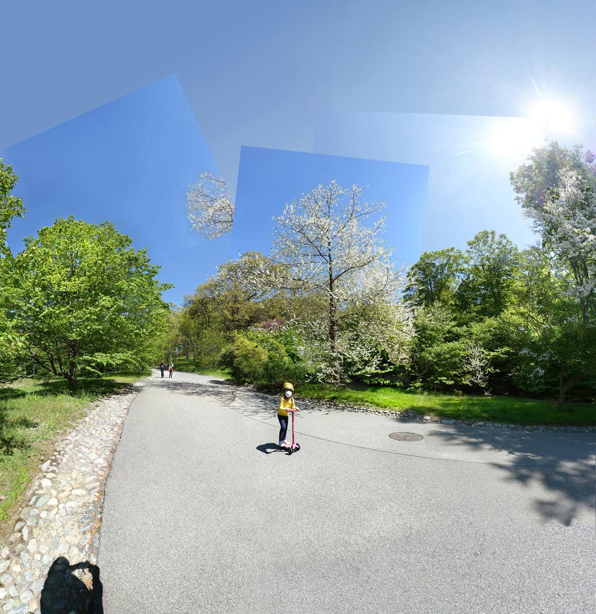 Sprite, Arnold Arboretum May 2020