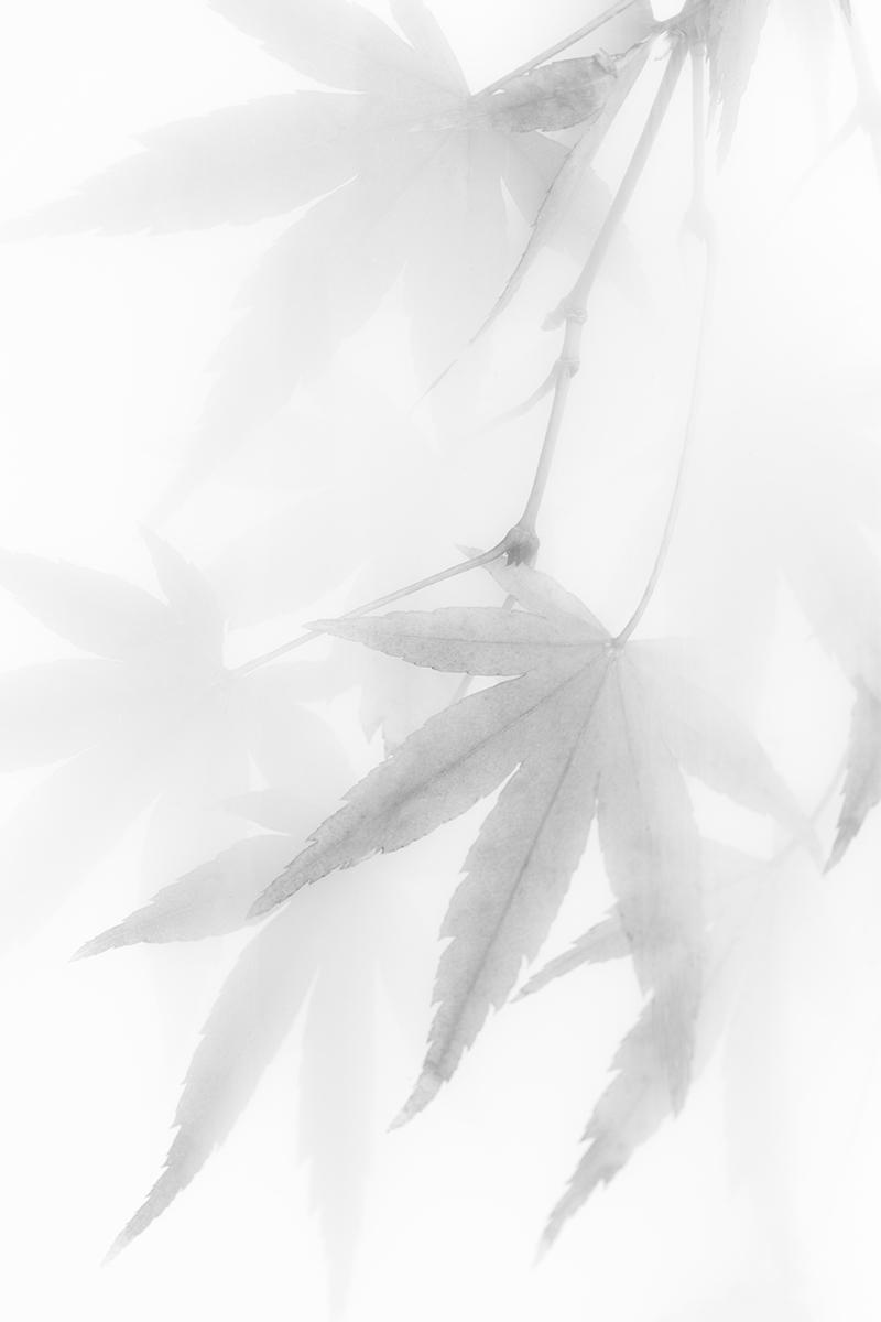 Pendulous Leaves