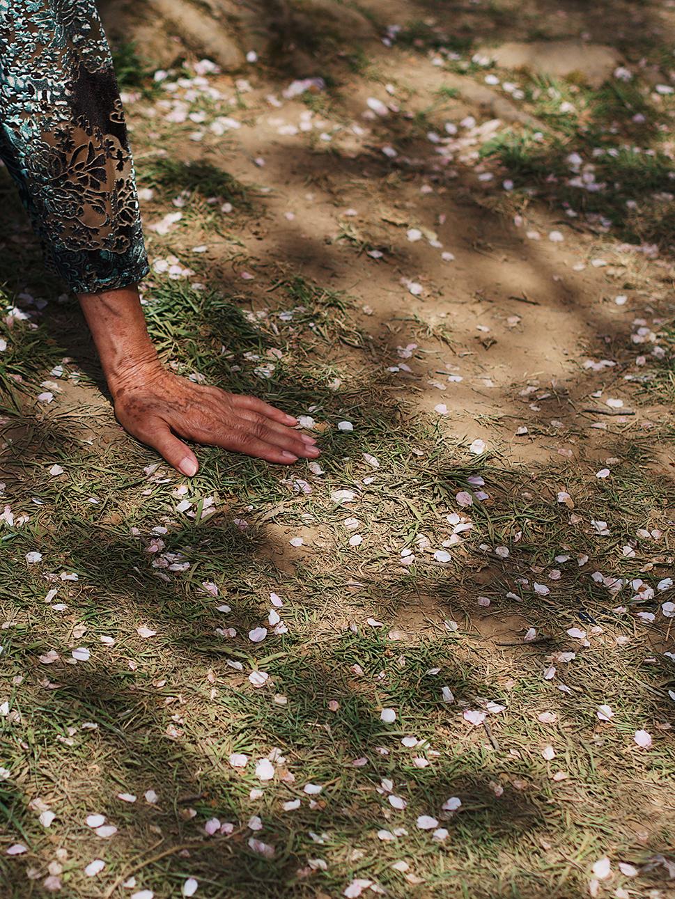 Petals, Adriana G. Torres
