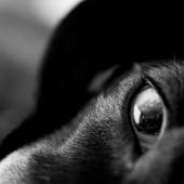 Shaun Martins - Eye to Eye