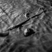 Emily Schiffer - Float