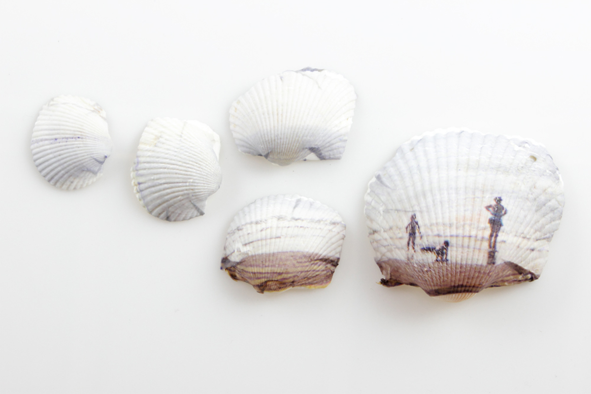 Shells by Anne Hopkins