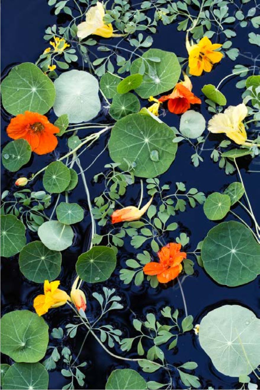 Water Tapestry with Nasturtiums from the series Garden Water Tapestries by Lisa Redburn