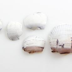 Shells by Anne Hopkins