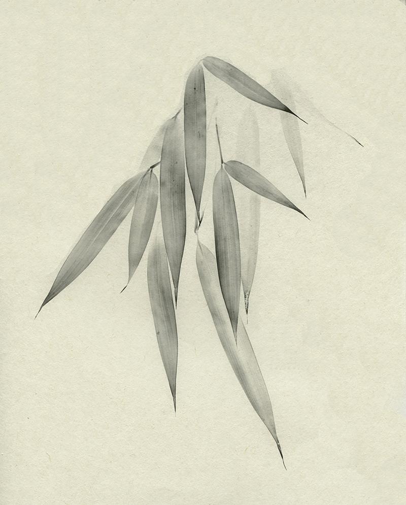 Bamboo (Take)