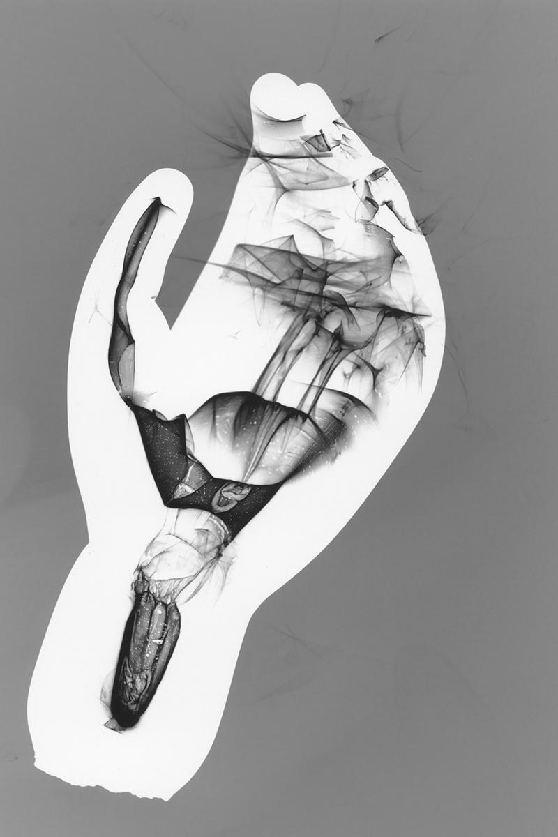 Nerve II